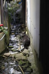 佐久島の猫